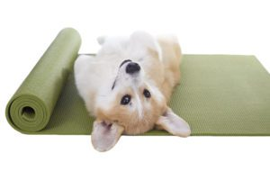 Dog laying down on Yoga Mat